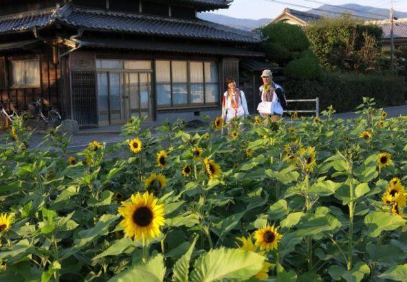 徳島のひまわり畑