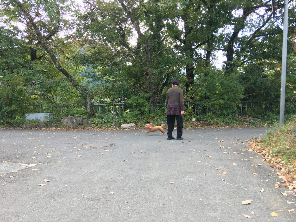 大女将と犬が歩く